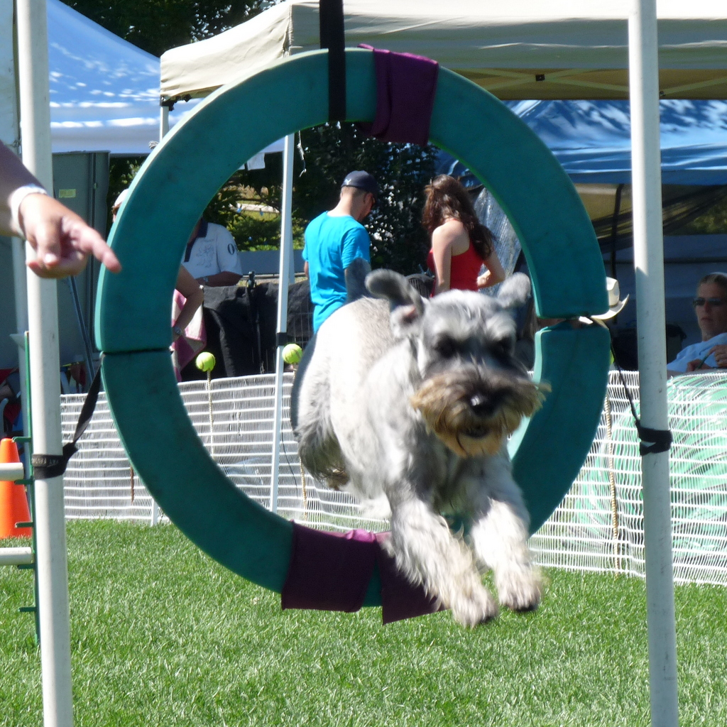 picture of dog jumping through hoop